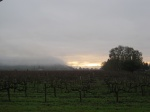 Sunrise in the vineyards